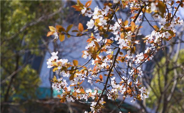 春暖花开,等你归来——邀你云赏南新春景,以慰思念